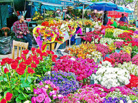 1-flower-market-in-taksim-square-in-istanbul-turkey-ruth-hager.jpg