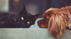 sahipli-kedi-kopek-ve-gelinciklerin-kimliklendirilmesi-zorunlu-oluyor-843132-5.jpg