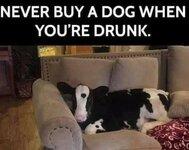 never buy a dog.jpg