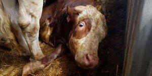 43059_BeefAntibiotics1_1_460x230.jpg