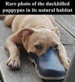 puppypus.jpg